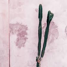 Plants Pink <b>Fashion</b> Concept <b>Cactus Wall</b> Background Minimal Plant ...