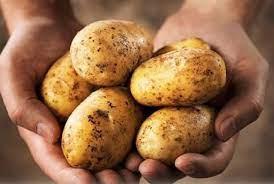 Khoai tây bổ nhưng ăn theo kiểu này còn độc hơn cả thạch tím