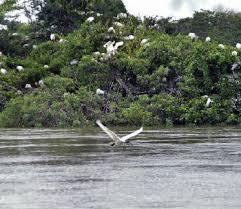 edward said essays online sample essay of professional goals top conservation natural vegetation essay com vedanthangal s oldest bird sanctuary