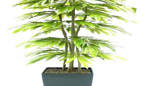 money plant large big house plants outdoor artificial trees pretentious best indoor info common what houseplants common large house plants
