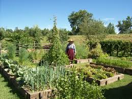 Kitchen Gardens Jardin Potager French Kitchen Garden Fort De Chartres Heritage