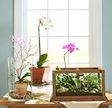 Orchid options
