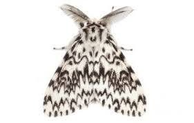 Moth Identification Chart A Simple Guide To Identifying British Moths Country Life