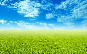 grass and sky backgrounds. Sky Grass Wallpaper Scenery Green And Backgrounds F