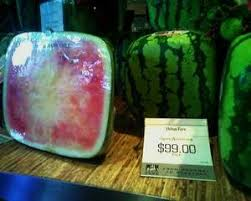 square watermelon plant.  Square A Handsome Profit Can Be Earned For Those Wanting To Grow Their Own Square  Watermelons Throughout Square Watermelon Plant R