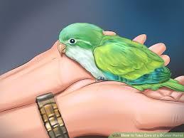 image led take care of a quaker parrot step 4