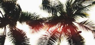 Suggestions Online Images of Twitter Headers Tumblr Palm Trees