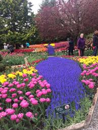 roozengaarde display garden roozengarde
