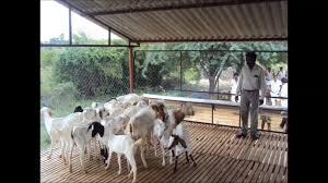 Goat Shed Design And Pictures Goat Shed Elevation Indian Modern House