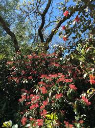 HGIC 1403 Muscadine Grape  Extension  Clemson University  South Fruit Tree Nursery North Carolina