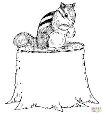Shrewd Chipmunk Coloring Pages Nut Eating On Tree Stump Page Grig3