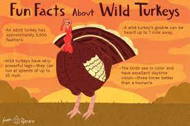 Subscribe to our free email alert service. Fun Wild Turkey Facts And Trivia