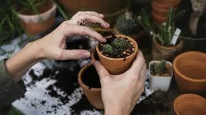 should you hire a gardener