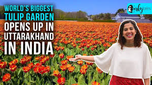 World's Biggest <b>Tulip Garden</b> Opens Up In Uttarakhand In India
