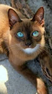 25 best ideas about Cute eyes on Pinterest