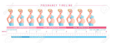 Pregnant Woman With Growing Belly By Months Pregnancy Timeline