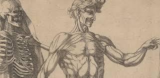 art human anatomy anatomy in the renaissance essay heilbrunn  art human anatomy anatomy in the renaissance essay heilbrunn timeline of art template