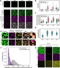 Specific viral RNA drives the SARS CoV-2 nucleocapsid to phase separate |  bioRxiv
