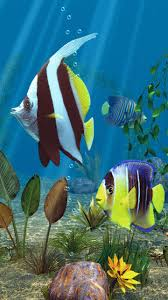 moving fish wallpaper for phones.  Moving Most Downloaded Animal Mobile Phone Wallpaper Free Download With Moving Fish Wallpaper For Phones O