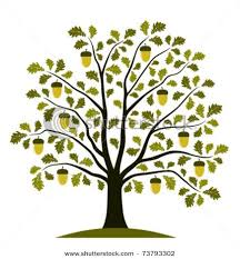 Image result for oak tree clip art