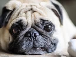 Hunde Erkennen Ob Wir Gute Menschen Sind Liebenswert