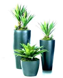 best tall indoor plants low light large house artificial uk h
