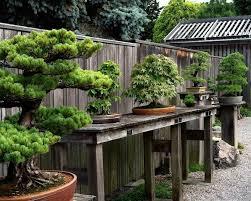 bonsai gardens. Weyerhaeuser Bonsai Garden, Aureliak Gardens