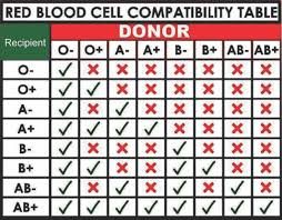 Blood Transfusion Chart Compatibility 48 Abundant Compatibility Chart For Red Blood Cells