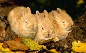 Free download wallpaper Rabbits animals ...