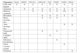 Cladogram-worksheet- & Cladogram Worksheet Answers Delibertad