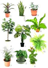 types of house plants house plants types indoor plants names indoor plants best position house plants types of house plants