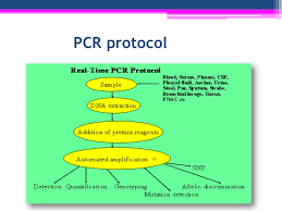 Technique Of Polymerase Chain Reaction Pcr Experimental Biotechnolo