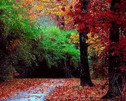 """Résultat de recherche d'images pour """"Palette d'automne"""""""