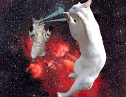 cats shooting lasers out of their eyes. Perfect Cats CAT 01 Each Other For Cats Shooting Lasers Out Of Their Eyes H