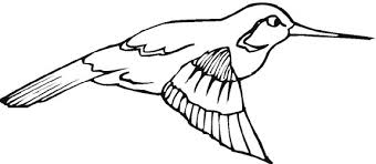 Small Picture Hummingbird Coloring Pages in Animals Category Gianfredanet