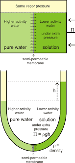 Water Potential Equation Osmotic Pressure