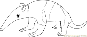 Small Picture Baby Anteater Coloring Page Free Anteater Coloring Pages