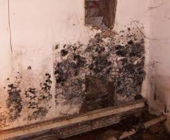 how to get rid of mold in basement mold pro inc toxic mold rh dogramadjiinica info