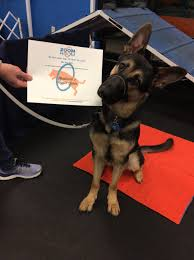The Zoom Virginia Beach Dog Training Agility Obedience Puppy