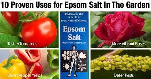 epsom salt gardening. Contemporary Gardening Epsomsaltgarden03312016 Inside Epsom Salt Gardening