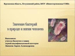 Презентация на тему Значение бактерий в природе и жизни человека  Презентация на тему Значение бактерий в природе и жизни человека