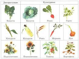Поле Растения и животные полей Отличия от природных экосистем  Поле Растения и животные полей Отличия от природных экосистем