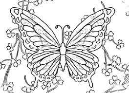 Small Picture Coloring Butterflies Website Picture Gallery Butterfly Color Pages