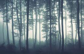 Sea Of Trees Forest Wallpaper Mural ...