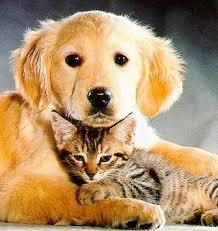 puppy and kitten cuddling.  Kitten A Puppy And Kitten Cuddling On And Cuddling S