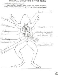 Parts Of A Frog Frog Body Parts External Reproductive System Of A Frog Frog Body