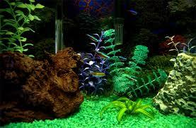 amazing aquarium background