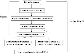 Method Study Charts And Diagrams Flow Charts For Different Dna Isolation Methods The Three