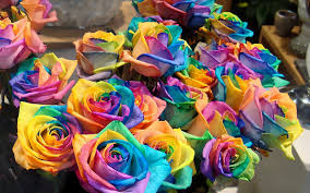 colorful rose wallpapers.  Wallpapers Colorful Roses Wallpaper To Rose Wallpapers O