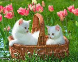 cute cats wallpapers free download. Simple Wallpapers Download Wallpaper On Cute Cats Wallpapers Free U